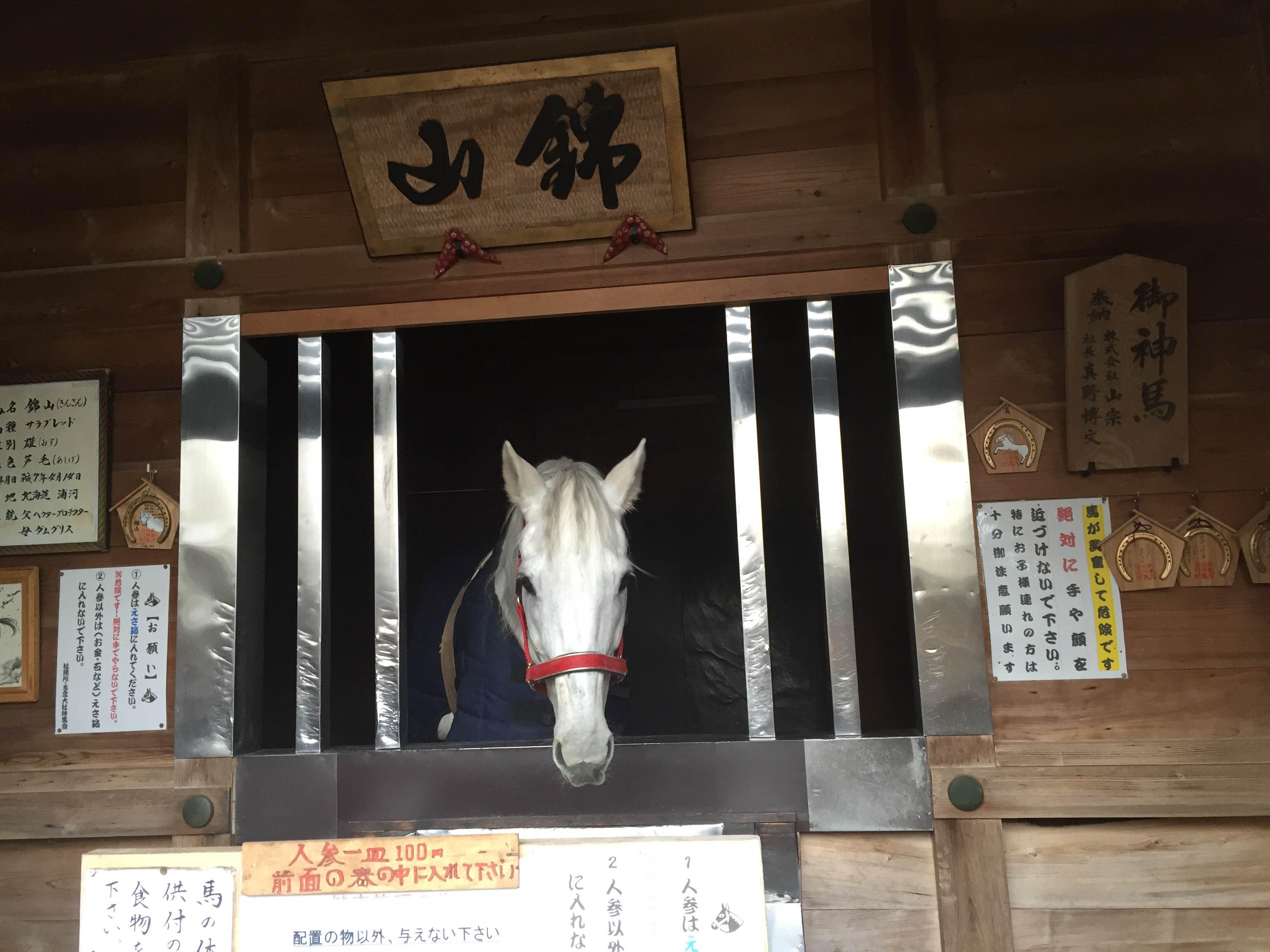 『馬も猫も白いのか、多度大社』